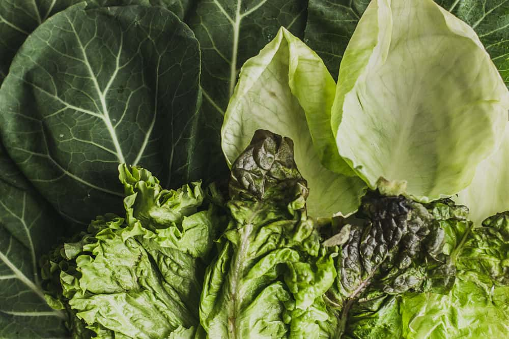 Close-up of different types of leaves: collard leaves, cabbage leaves, and lettuce leaves